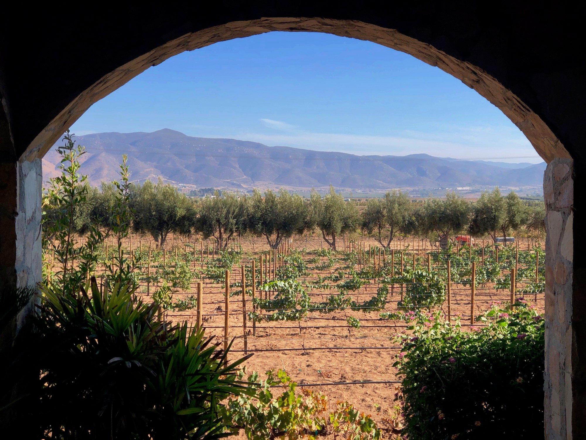 Valle-de-Guadalupe