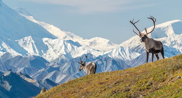 Enjoying spring vacation activities at Denali National Park simplified with Luggage Free