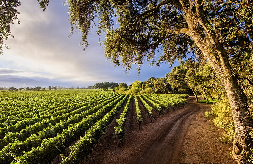 Top vacation destination for wine lovers is Sonoma in California
