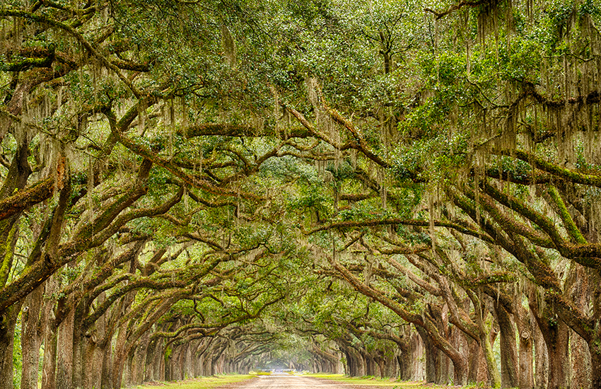 Where to travel for Labor Day this year is Savannah, Georgia